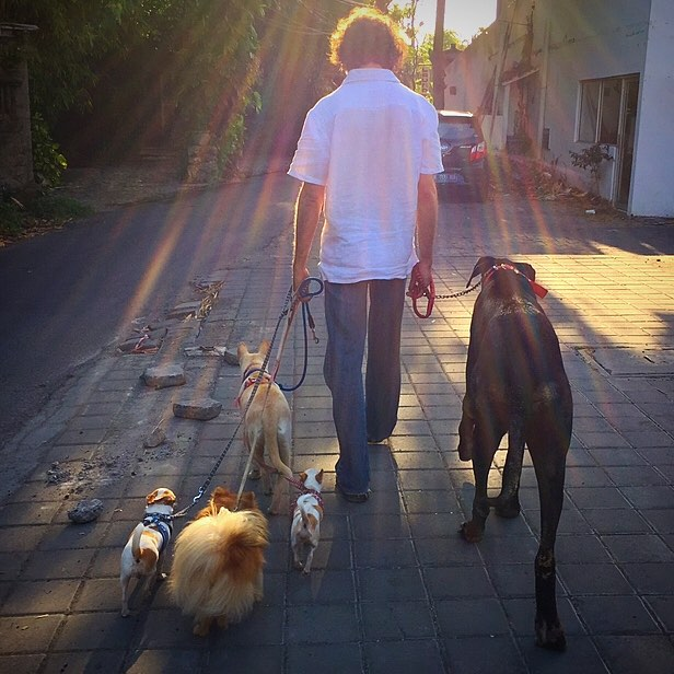 As professional house sitters, we take pride in our job and make your pack feel at home.